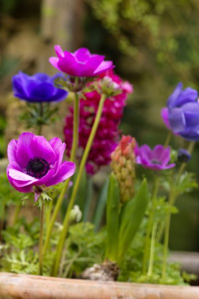 Mixed Spring Flowering Bulbs