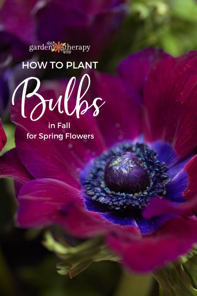 How to Plant Bulbs in Fall for Spring Flowers