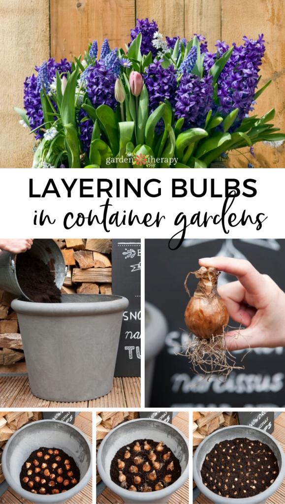 Layering Bulbs in Garden Pots