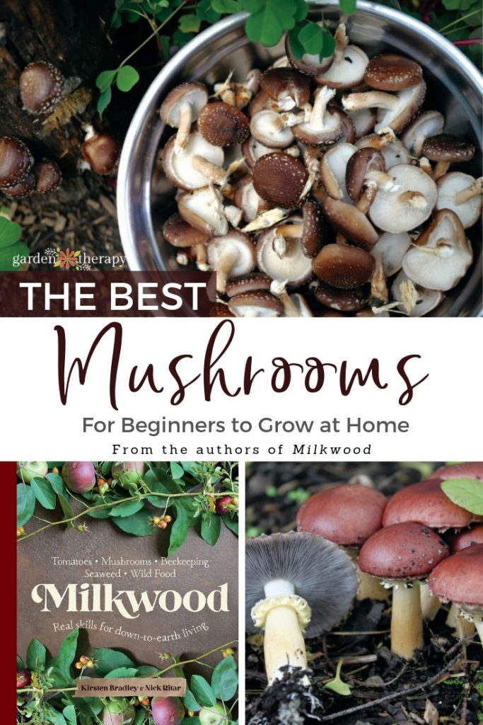 The Best Mushrooms to Grow at Home for Beginners - Garden