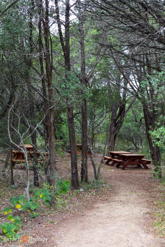 Picnicking at the Arboretum