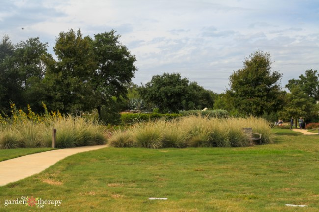 Savanna Meadow View