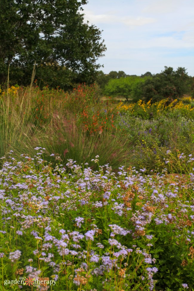 Savanna Meadow Wildflowers
