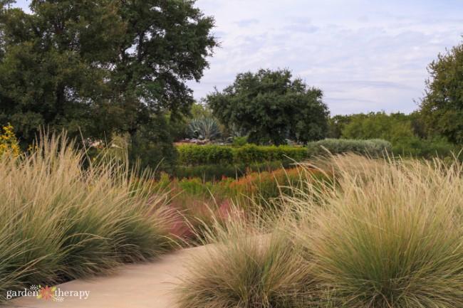 Savanna Trail Grasses