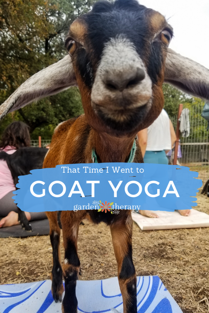 That Time I Went to Baby Goat Yoga in Texas