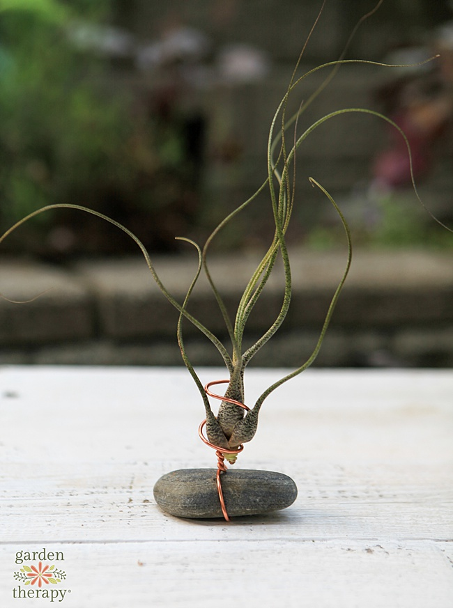 Air plant stand with a flat gray rock and copper colored wire.