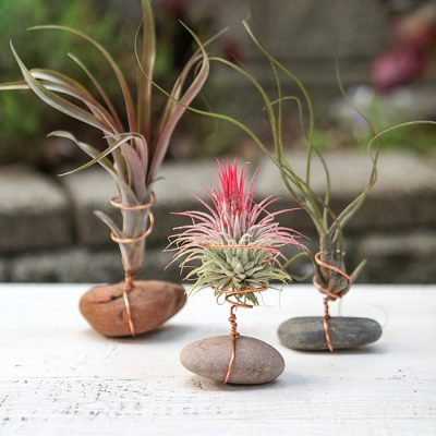 Air Plant Holder with Rock and Wire  {DIY Air Plant Display}