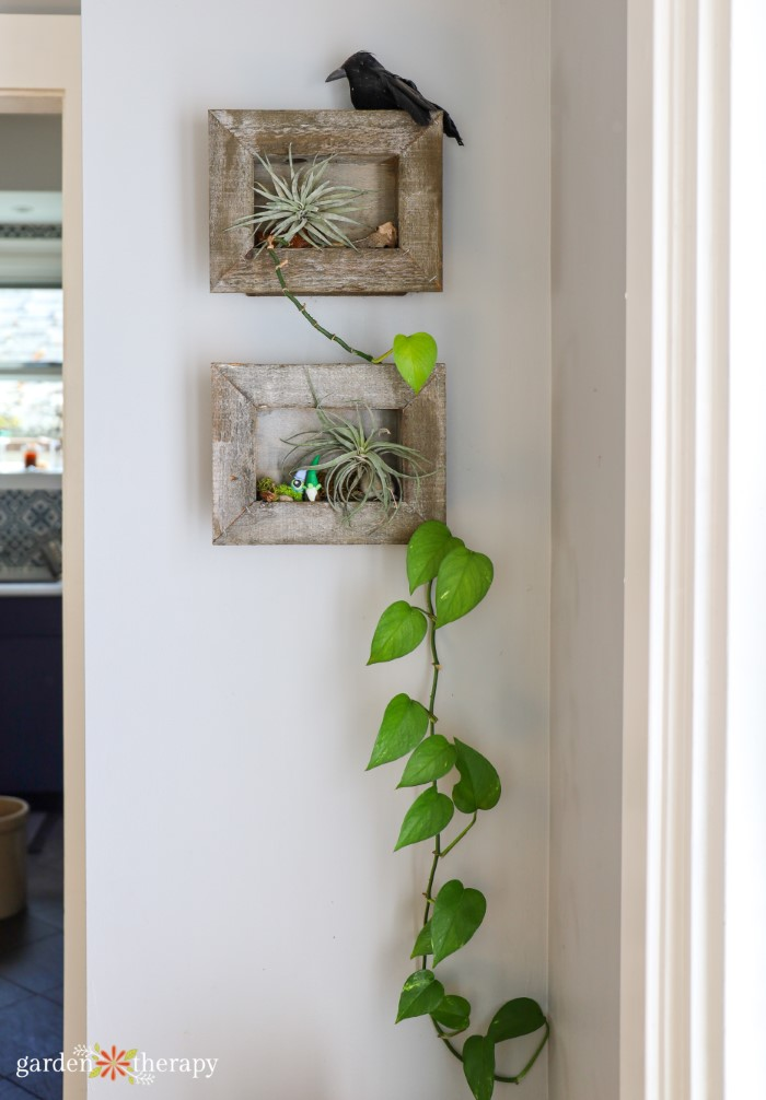 pothos hanging from picture frame