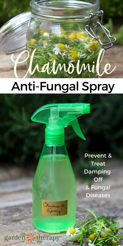 Chamomile Anti-Fungal Garden Spray