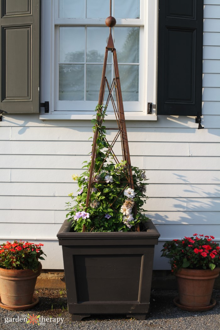 Container garden rose plant support trellis