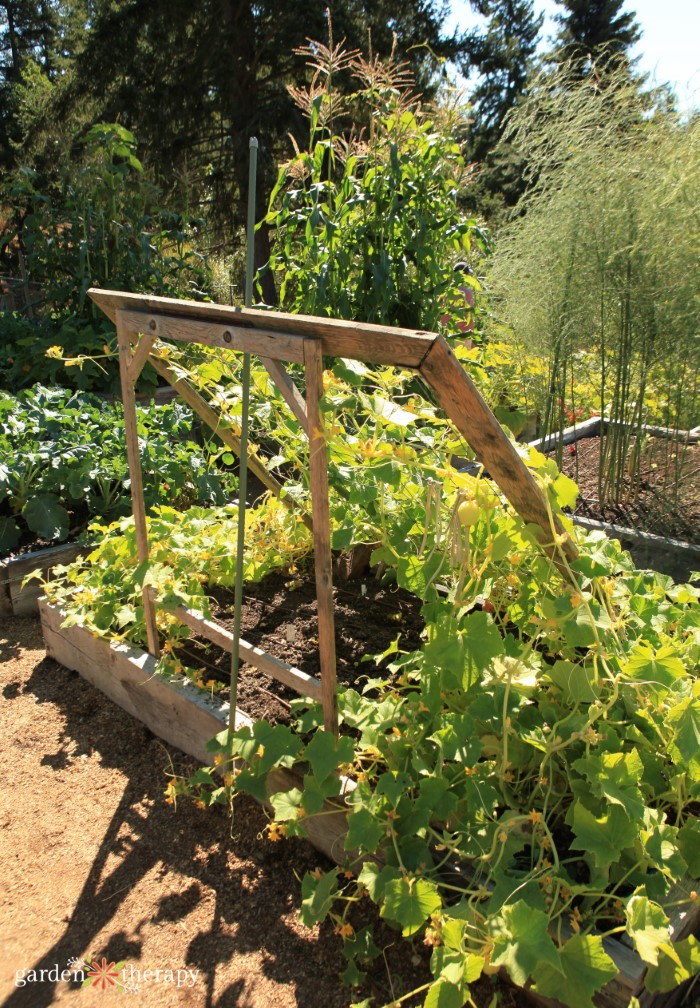Cucumber Trellis Support Structure