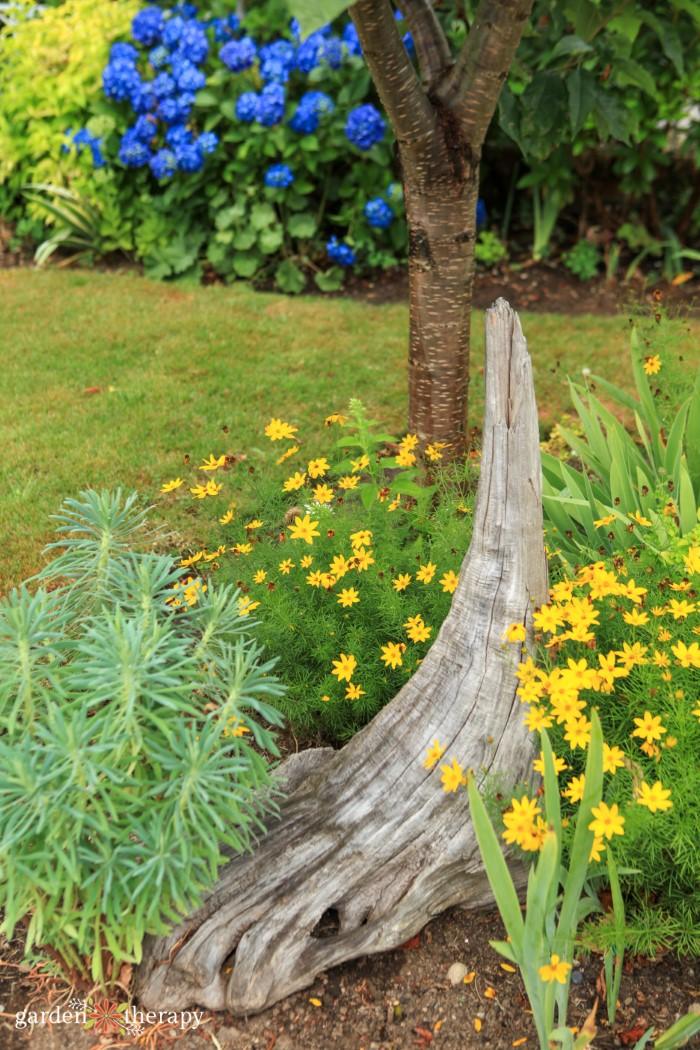 Driftwood in the garden