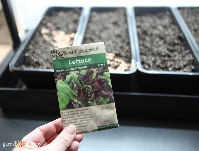 Growing Lettuce Microgreens