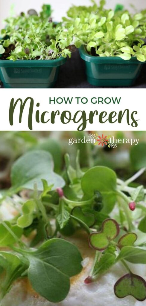 How to Grow Microgreens + What to Do With Them