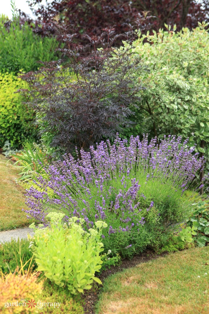 Mixed Border planting perennials