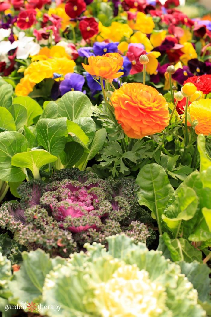 Mixed Edible and Ornamental Garden bed