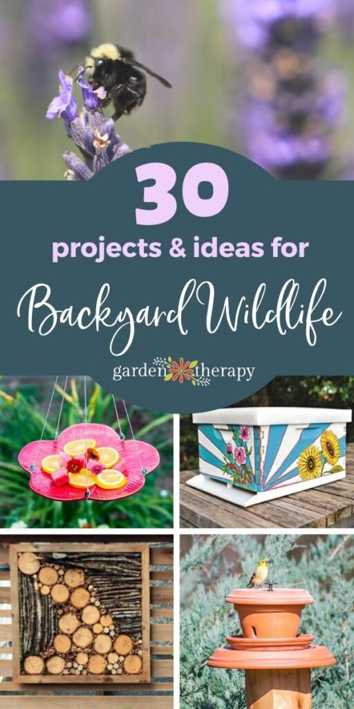 30 projects and ideas for backyard wildlife habitats