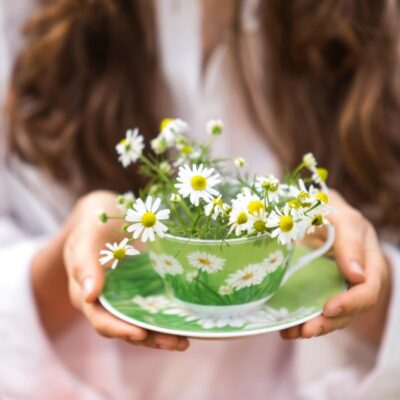 Herbal Guide to Chamomile: How to Grow & Harvest Chamomile Flowers