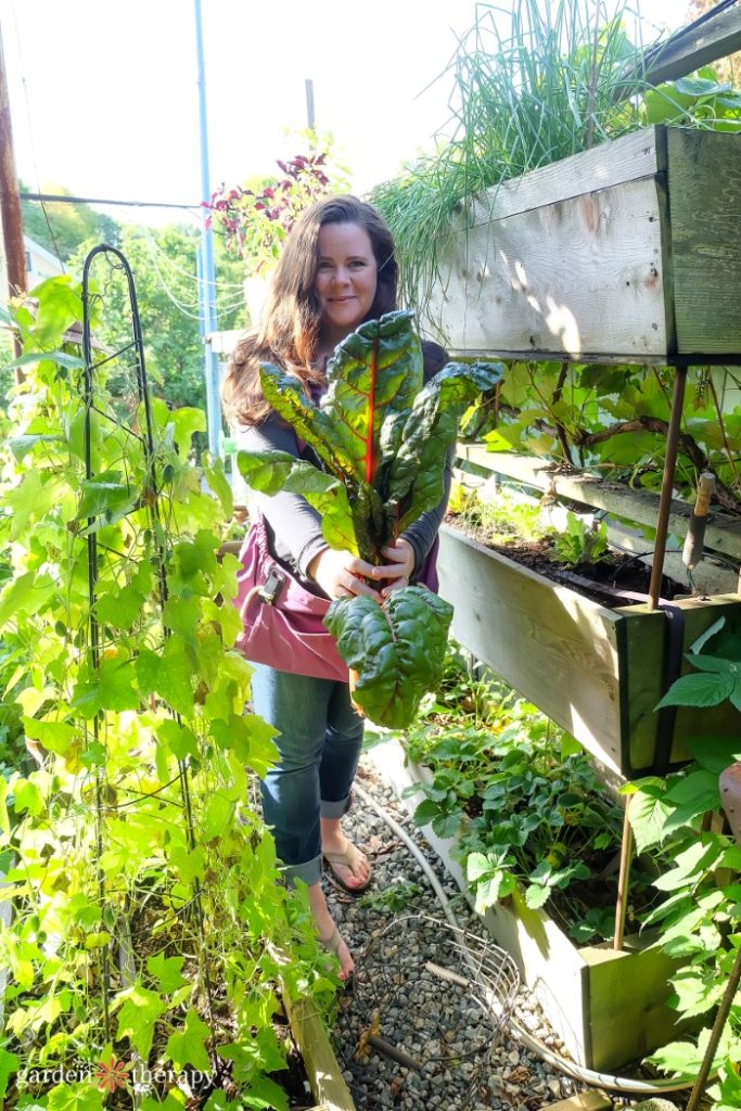 Woman harvesting chard from a vertical garden bed