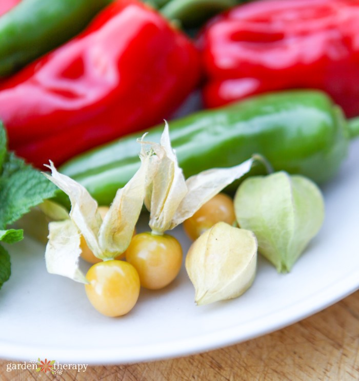 Ground cherries on a white plate with cucumbers and red bell papers