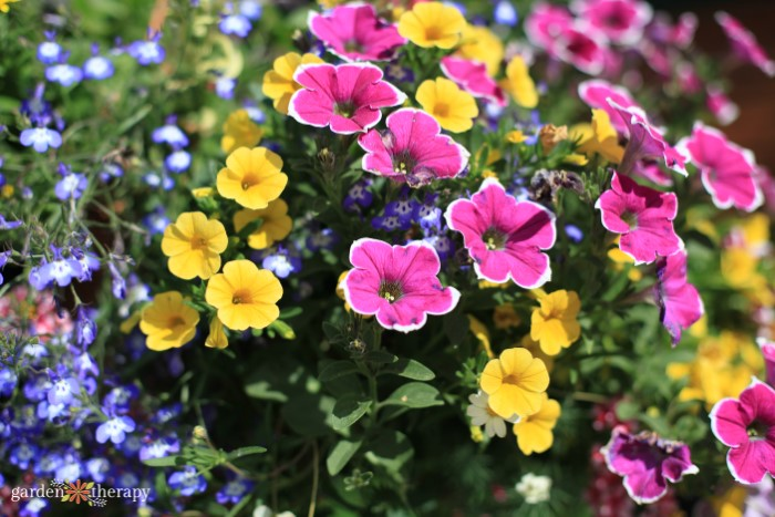 Close up fo pink and yellow flowers with purple flowers in the background