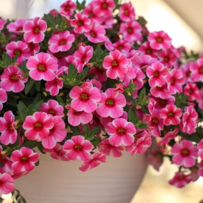 An Easy Care Guide for Luscious Hanging Basket Flowers