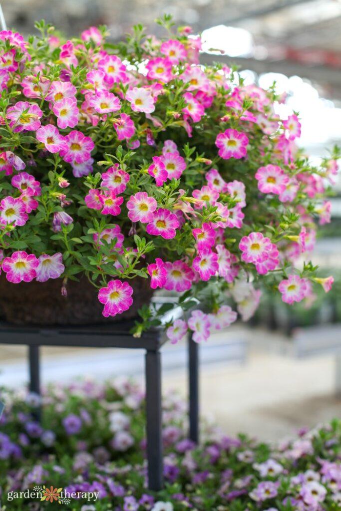 Pink flowers blooming in a basket
