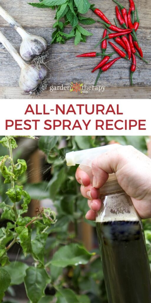 Pinterest graphic for all natural pest spray recipe
