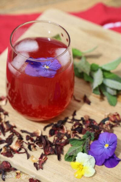glass of freshly made hibiscus iced tea surrounded by botanicals