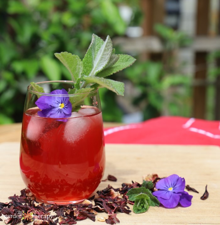 glass of hibiscus iced tea on a counter with stevia leaves in the glass