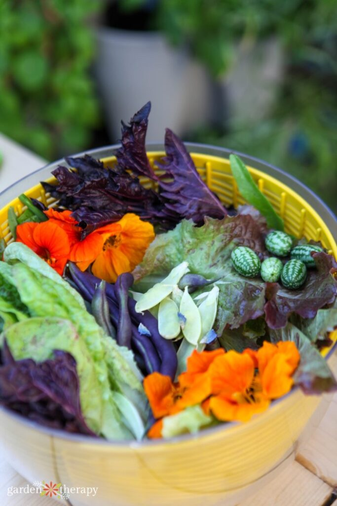 Basket full of freshly harvested veggies such as lettuce, edible flowers, peppers, and cucamelon