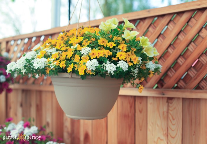 Hanging basket with white and yellow flowers