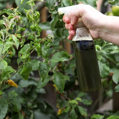 Natural Pest Control Spray with Herbs