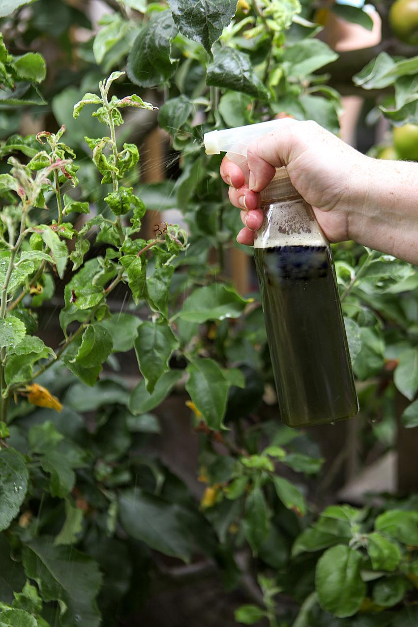 natural pest control spray for aphids