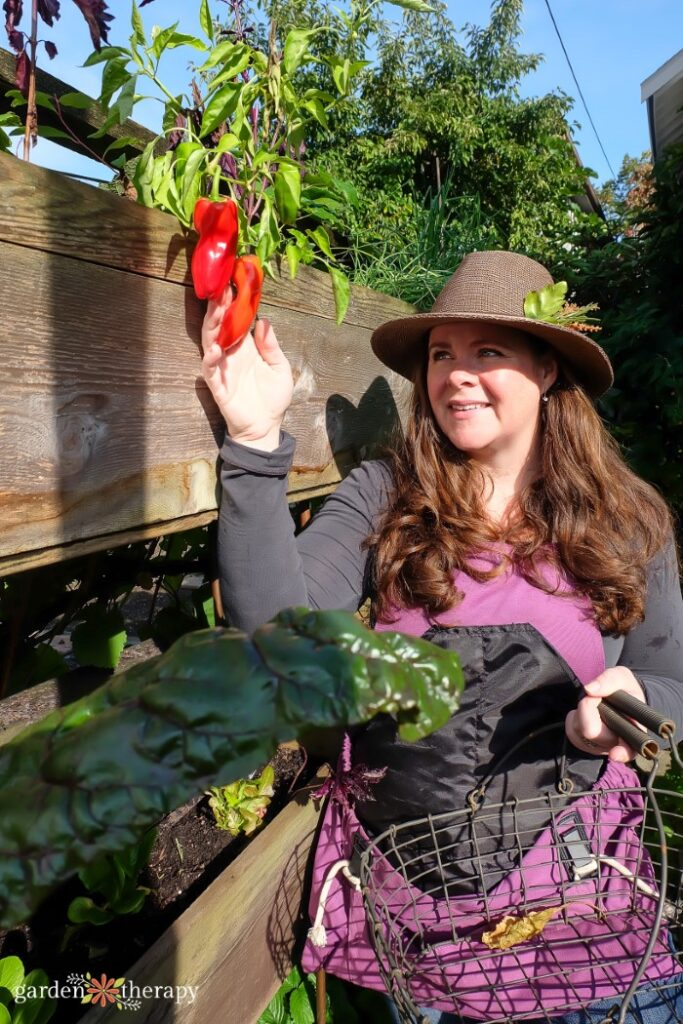 Woman with hat harvesting red peppers from the top section of a vertical garden bed.