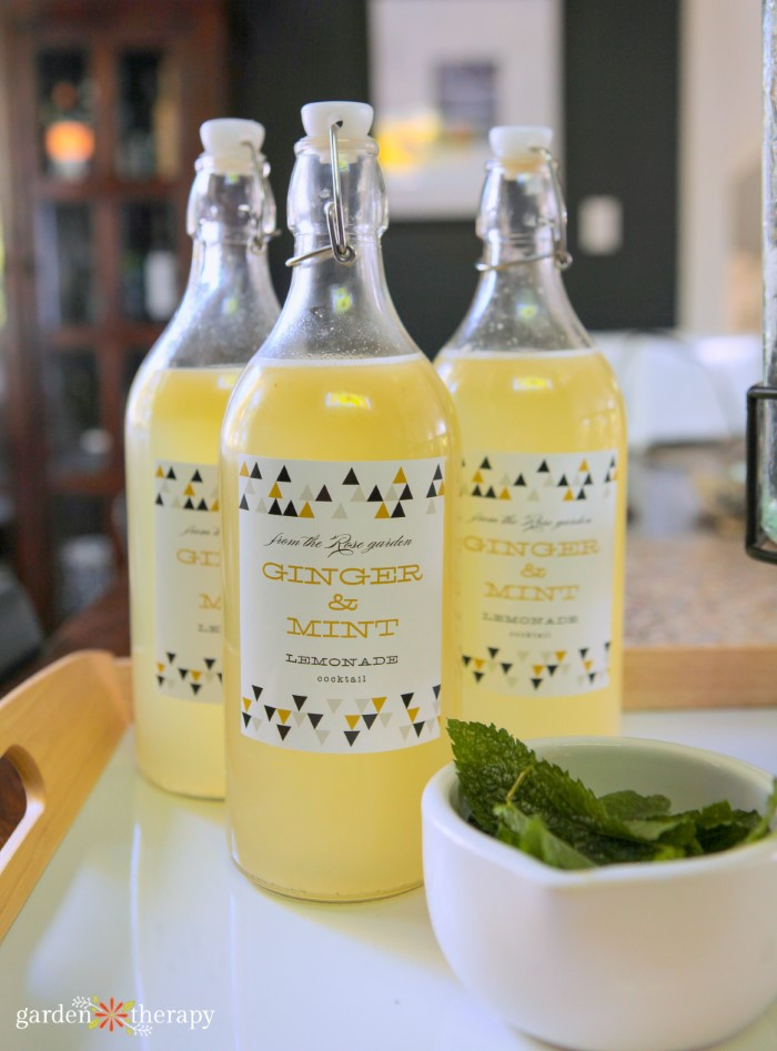 3 bottles of ginger and mint lemonade on a tray with a bowl of fresh mint