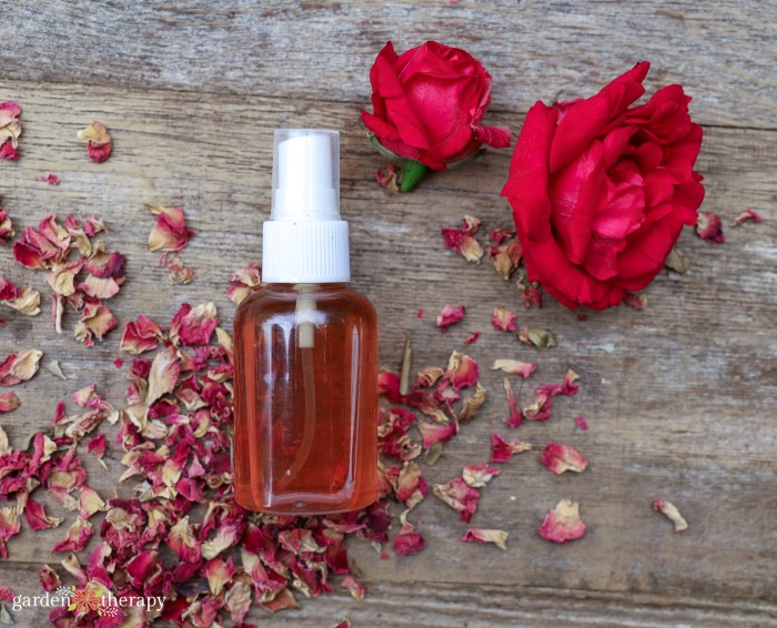 DIY rose water spray made from dried rose petals.