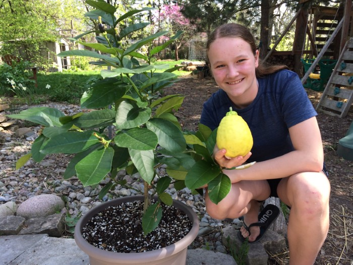 Girl holding a large home-grown lemon next to a potted lemon tree.