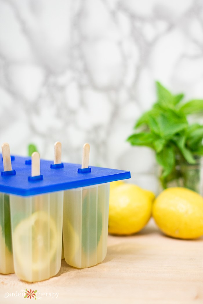 Popsicle molds filled with lemon and mint