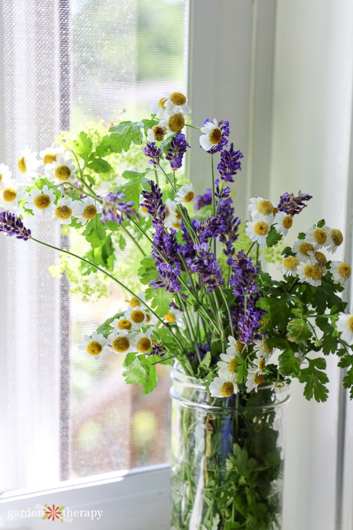 Bouquet of feverfew with lavender by a windowsill.