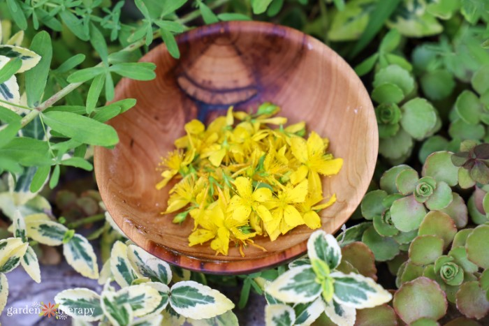 Wooden bowl with St. John's wort flowers inside.