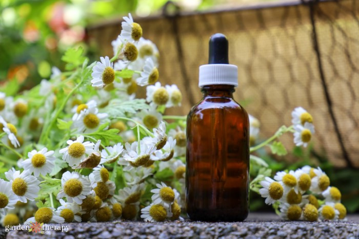 White flowers with yellow centers next to a bottle of essential oils.