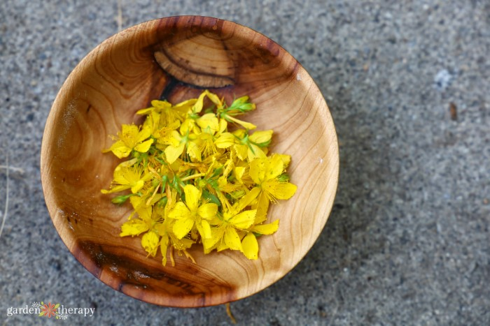 St. John's wort flowers in a wooden bowl