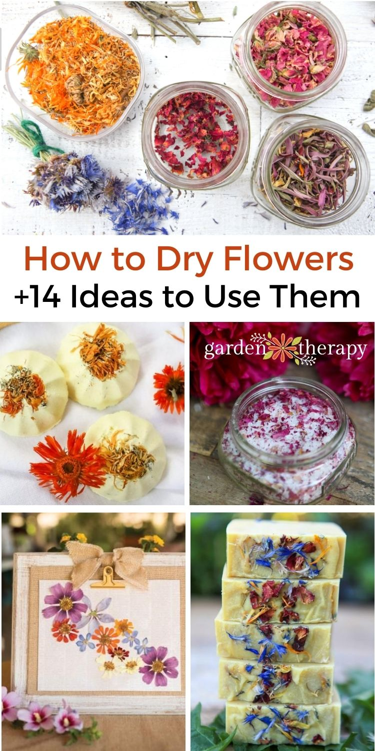 How to dry flower petals and what to do with them