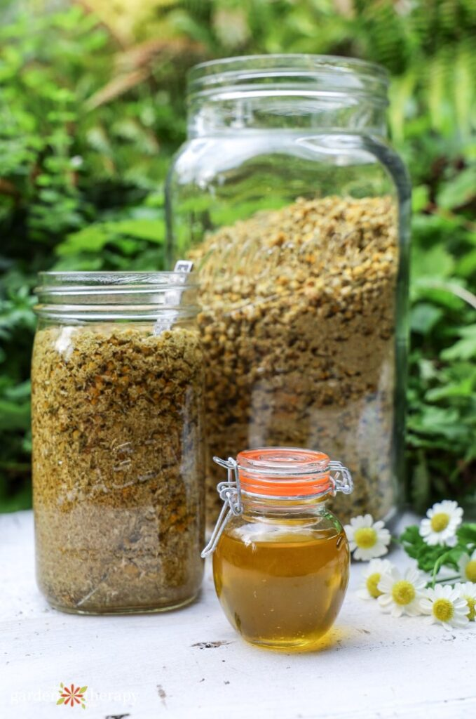 Chamomile oil stored in a jar