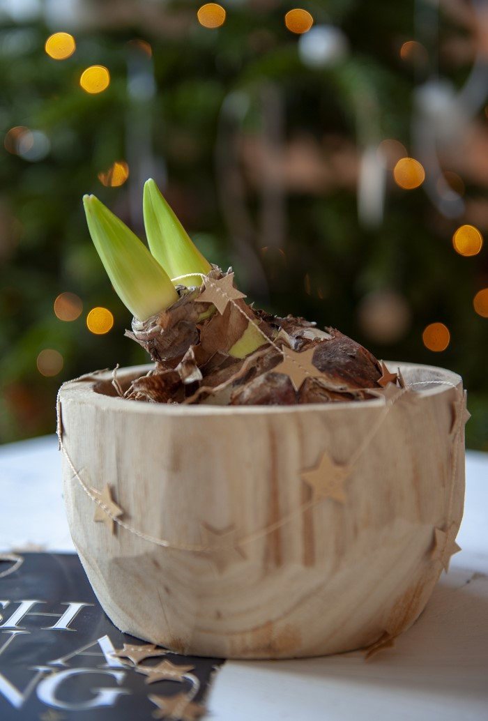 Forcing Bulbs for the holidays