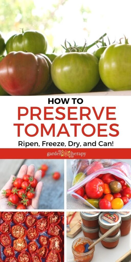 visual showing different ways to preserve a tomato harvest