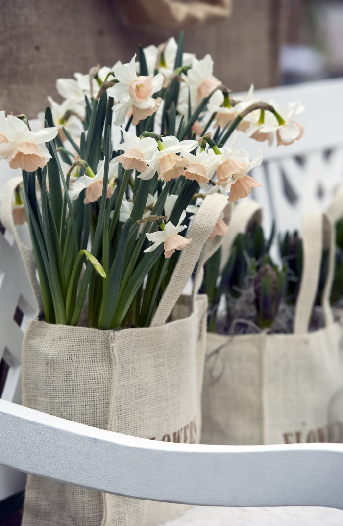 Mini-Narcissus-Daffodils-in-Bags