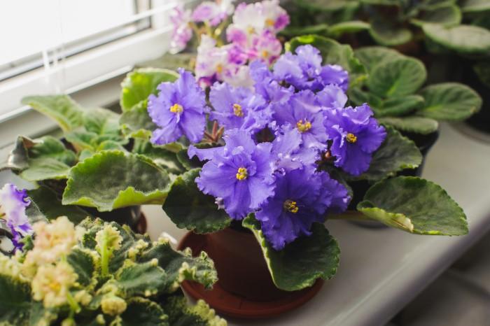 Propagated houseplants by a windowsill