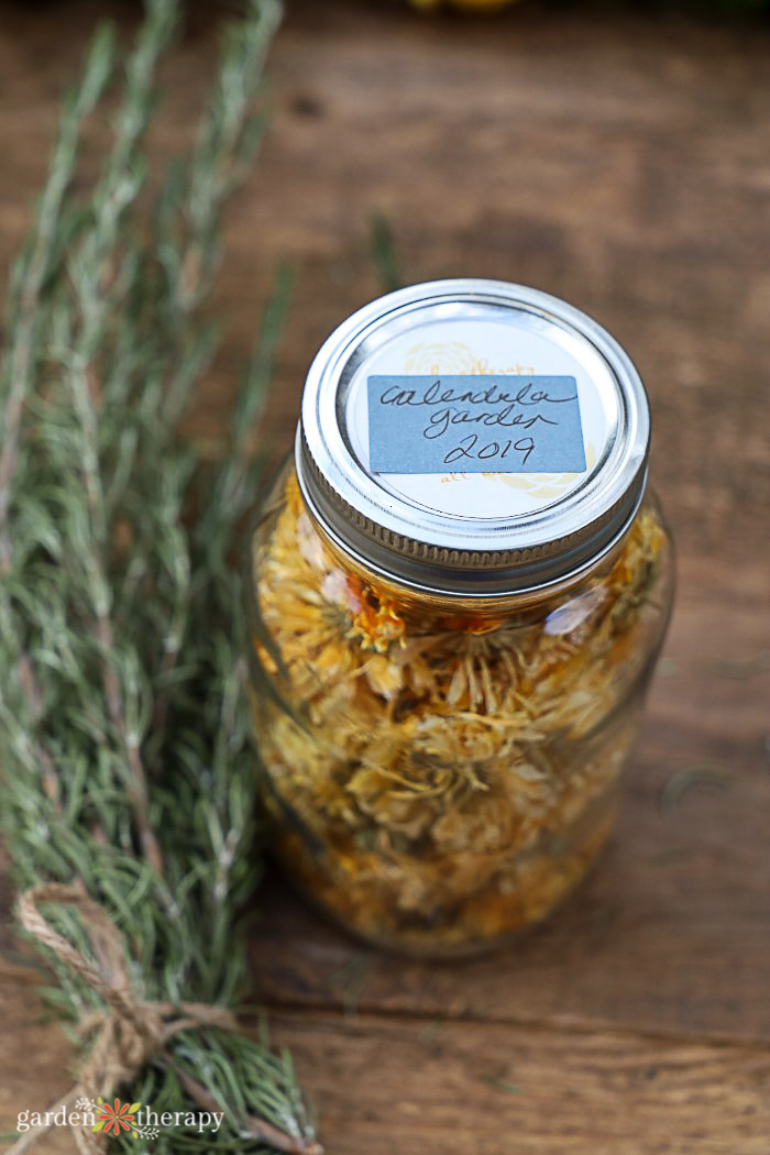 Jar of dried calendula next to rosemary sprig